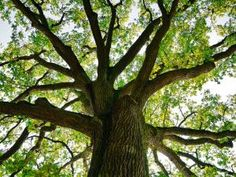 Robert Macfarlane: Why climb a tree?   Big Issue