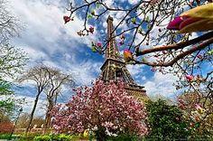 Magnolias en fleurs au pied de la Tour Eiffel