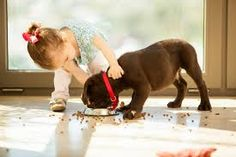 little dog and girl - Google 検索