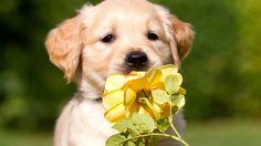 ** so cute **