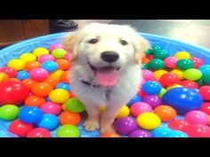 FUNNY DOG VIDEOS 4 -  #dogs #funnydogs #puppy #doglover #animals #pet #cute #pets #animales #tagsforlikes Stop Your Dog's Behavior Problems! Click HERE to learn how! JOIN TEAM 2M! NEW VIDS MON, WED & FRI @ 5ET!! LIKE, COMMENT & SHARE!!! ******************************************* TWITTER:  FACEBOOK:... - #Dogs
