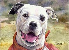 American Bulldog (Casper)