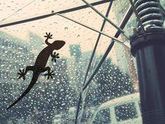 傘にも窓にも貼れる! ヤモリのステッカー
