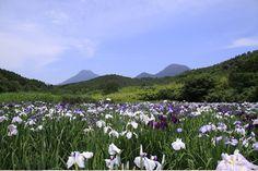 flowers over the lake-kagurame #beppu #oita #japan