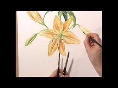 DVD - Botanical Illustration with Siriol Sherlock Quick 3min inspiration for flower painting