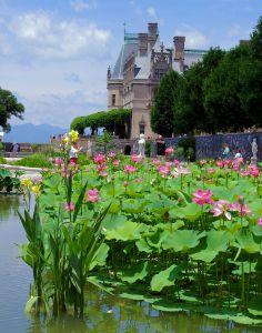 Biltmore House Italian Gardens in bloom