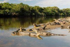 Pantanal-Mato Grosso do Sul Brasil