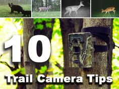10 Trail Camera Tips - by Bowsite.com. Tim needs to read this.