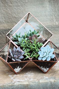 Three terrariums in one planter. Because when it comes to plants, we always want more: