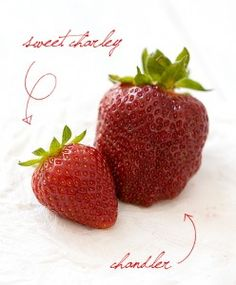 Sweet Charley and Chandler Strawberries