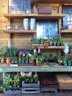 Like the deep shelves to hold propagating plants