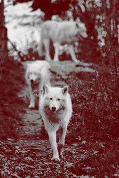 Wolfs♥