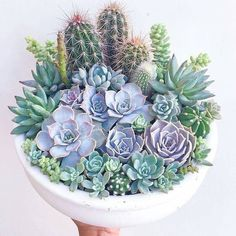 Charming Succulent Indoor Garden Ideas 2019 - Page 30 of 64 - SooPush - s . - Charming Succulent Indoor Garden Ideas 2019 – Page 30 of 64 – SooPush – succulent garden i - Succulents In Containers, Cacti And Succulents, Planting Succulents, Planting Flowers, Growing Succulents, Succulent Bowls, Succulent Arrangements, Succulent Terrarium, Terrarium Wedding