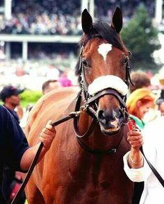 Kentucky Derby Winner Barbaro