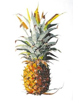 Rosie Sanders  Pineapple - Monotype.