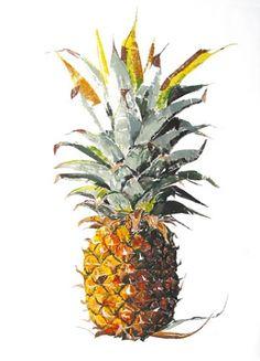 Rosie Sanders  Pineapple - Monotype.