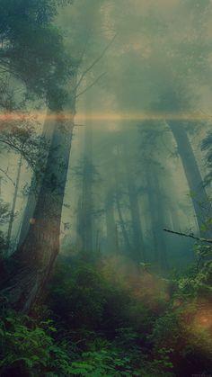 Dark Dreams, Dark Forest #grunge