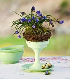 Hyacinth nest  A footed dish provides an ideal platform for grape hyacinths nestled into a stylized bird's nest.  Buy a pot of blooming grape hyacinths as well as a small bird's nest and moss (from a crafts store). Gently rinse most of the soil off the hyacinth's bulbs and roots. Carefully wrap a rubber band around the group of stems, tightening just enough to hold them upright. Place the clump in the nest, and tuck moss around the stems to cover the bulbs and hold the stems in place.