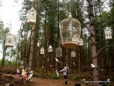 Bird cages in the trees at the Spellbound Forest event at the Forestry Commission's Delamere Forest.     www.forestry.gov....