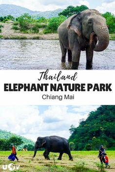 The Elephant Nature Park of Thailand and what they are doing to help save elephants from the elephant tourism industry. Vietnam Travel, Thailand Travel, Asia Travel, Travel Inspiration, Travel Ideas, Budget Travel, Travel Tips, Elephant Nature Park Thailand, Save The Elephants