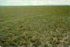 Image result for short grass grasslands