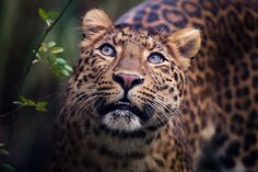 The Queen is not Amused...but I am. — magicalnaturetour:   Mr. Awesome by Annette Wagner
