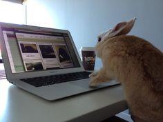 Bunny peruses the photos on Daily Bunny - September 26, 2012