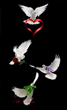 God gives good gifts, not because of us but because He is good. Beautiful Gif, Beautiful Places, Best Photo Background, Emoji Love, Kinds Of Birds, Gods Creation, Photo Backgrounds, Swans, Martin Luther