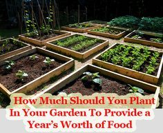 How Much Should You Plant In Your Garden To Provide a Year's Worth of Food