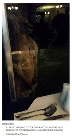 Meanwhile, in Australia #funny