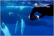 Why We Travel: Snorkeling in the Dominican Republic with Humpback Whales.