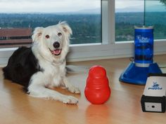PupPod: Gaming Platform to Engage Your Dog's Brain project video thumbnail