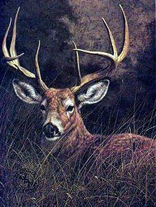 Peaceful Whitetail Deer Jorge Mayol Whitetaildeerwatercolor Whitetaildeerartprints Deer Art Deer Painting Deer Drawing