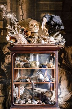Cabinet of Curiosities - collections