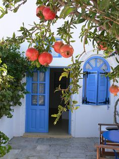 Pomegranates on the Patio A pomegranate tree just outside the terrace to a Senior Suite at Remezzo Villas.