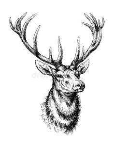 Vintage Stag Deer with Antlers Fabric Transfer Instant Stag Deer, Buck Deer, Deer Antlers, Hirsch Illustration, Deer Illustration, Deer Sketch, Hirsch Tattoo, Stag Tattoo, Tattoo Bein