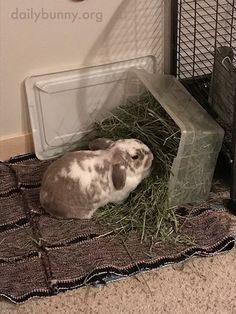 Hay Is Tastier When You Make a Mess Eating It 2