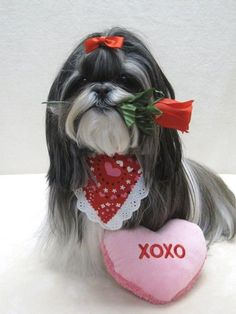 Valentine's Day Musings from Cards to Dogs to Handguns and More