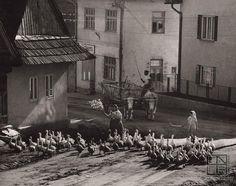 Martin Martinček: Ráno v Liptovskej Tepličke:1958 - 1962