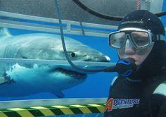 EstiloDF » Prueba tu adrenalina en Aqua Sub Australia