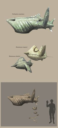 These are three much more derived species of the extraterrestrial fishes which inhabit Silvanus. H. drabirii and H. wegneri are very common at the root reefs under the Mundodendralis trees, with th...