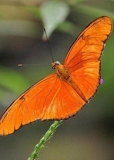 Butterfly by Tim Elliott