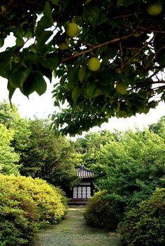 [서울 궁투어 코스 2] 창덕궁 / Changdeokgung Palace | photoguide :: 포토가이드