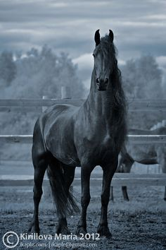 Friesian...The most beautiful horses I've ever seen.