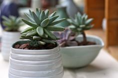 Adore succulents in little containers