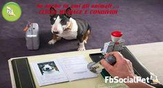 Documenti del cane: differenza fra Libretto Sanitario, Microchip, Passaporto e Pedigree