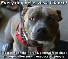 Every dog....