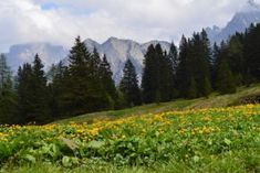 Sommerurlaub Brandnertal Mountains, Nature, Travel, Summer Vacations, Beautiful Places, Viajes, Traveling, Nature Illustration, Off Grid