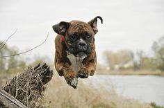 Dog flight, Spacer, Boxer, River