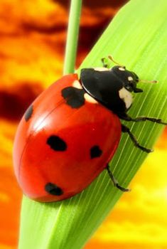 World's Most Interesting Pictures and Images: ladybug